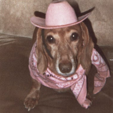 Dottie Fuchs sent in this photo of her dachshund, Clemintine, dressed up for Valentine's Day.