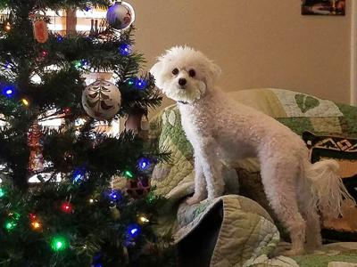 Judith Leonard of Festus sent in this photo of her dog, Trixie.