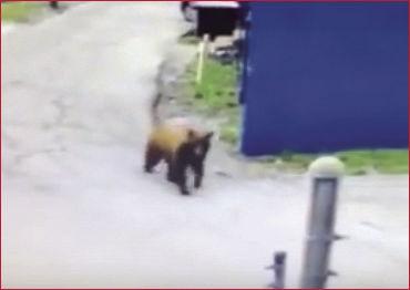 bear at eureka
