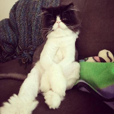 Loyd's cat, Morty
