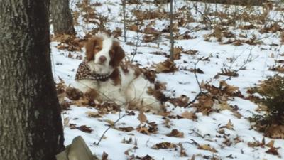 Noelle Church Michler sent in this photo of her late dog, Freckles.