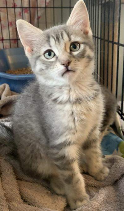 """""""Cat of the Week"""" Adoption Available"""