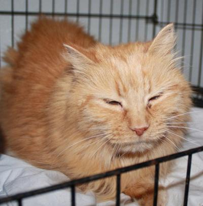 Cat of the Week/Adoption available