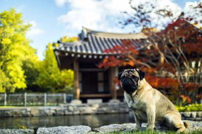 International Travel with pets