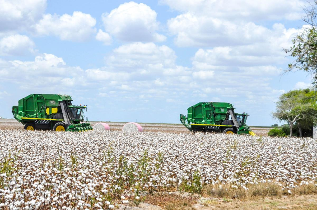 Local farmers gear up for cotton harvest