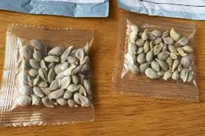 Recipients advised to report unsolicited seed shipments