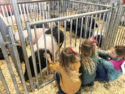 McMullen County youths, animals shine at 79th junior livestock show