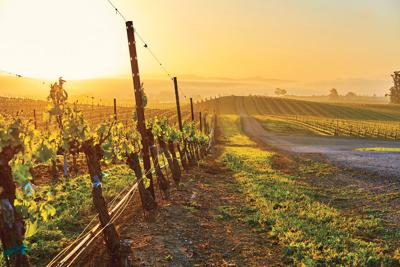 Off the Beaten Vine in the Wine Country
