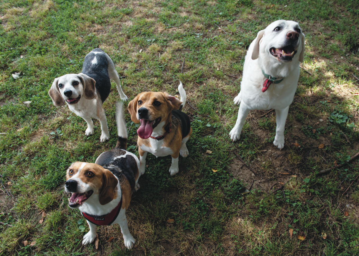 The Pet Issue 2020: Snack Attack