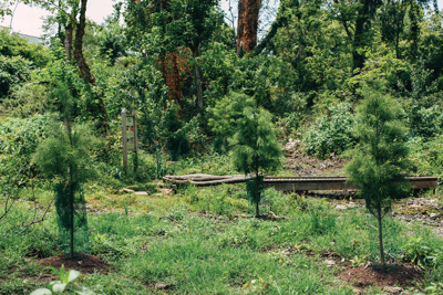 Tree Lovers Are Replacing Some of Nashville's Lost Greenery