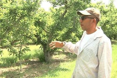 Tieton farmer achieves his dream with help from a federal loan