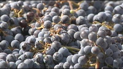 Study suggests climate changes will impact the US wine industry
