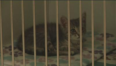 Animal Shelter Keeping Animals Cool During Heat Wave
