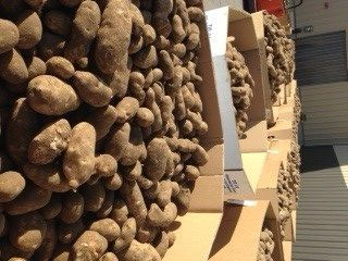 Bayer CropScience Donates 60 Tons of Potatoes to Local Hunger-Relief Organizations