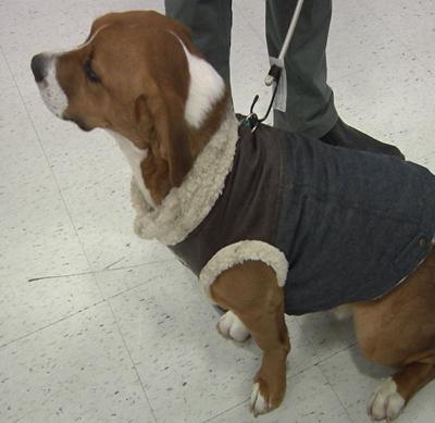 pet with coat