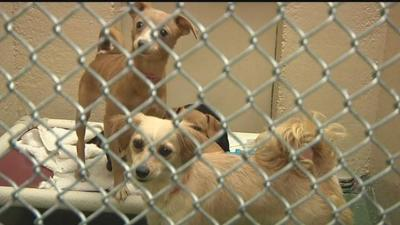 Yakima Humane Society struggling to care for 34 dogs found