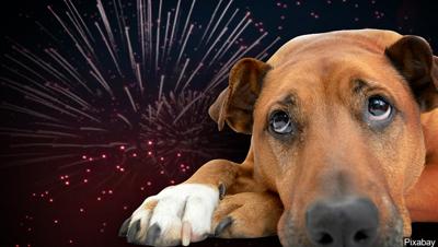 dog fireworks animals