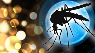Mosquitoes in Benton County test positive for West Nile virus