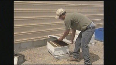 Learn more about bee colony collapse this Saturday