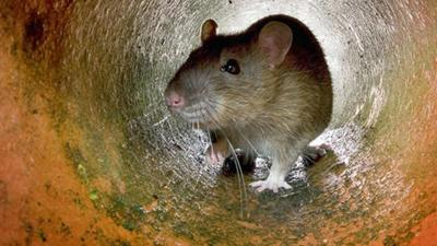 Ellensburg Dealing with Rat Related Power Outage