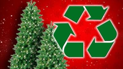 Options available for Christmas tree disposal in Yakima