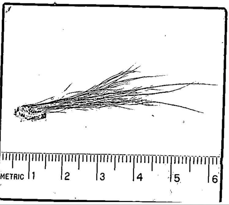 Bigfoot Sample Deer Hair