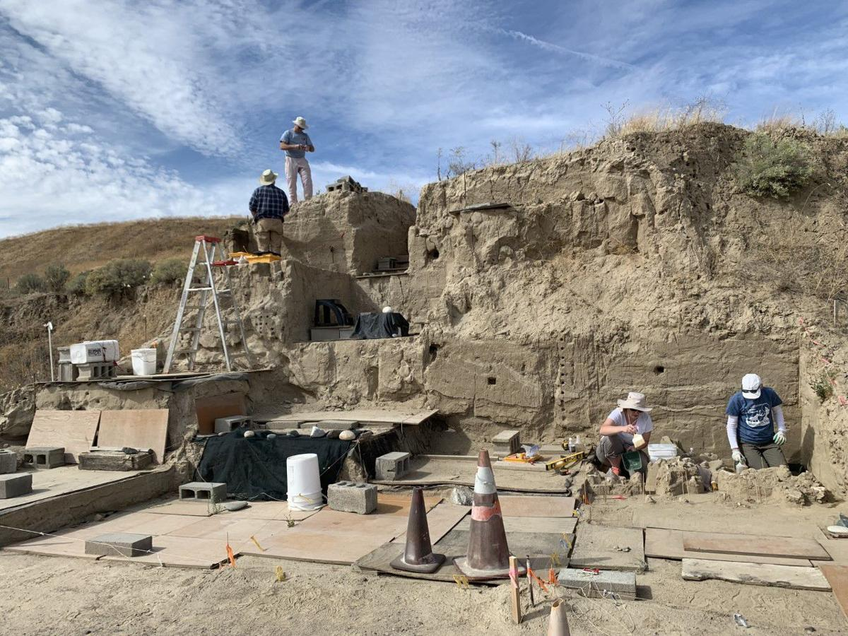 Researchers dig up Mammoth bones thousands of years old 2