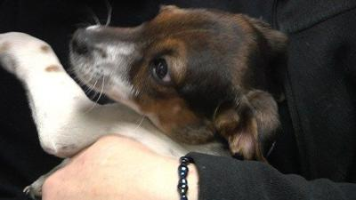 Grant Will Help Low Income Pet Owners in Selah Cover Spay, Neuter Surgeries