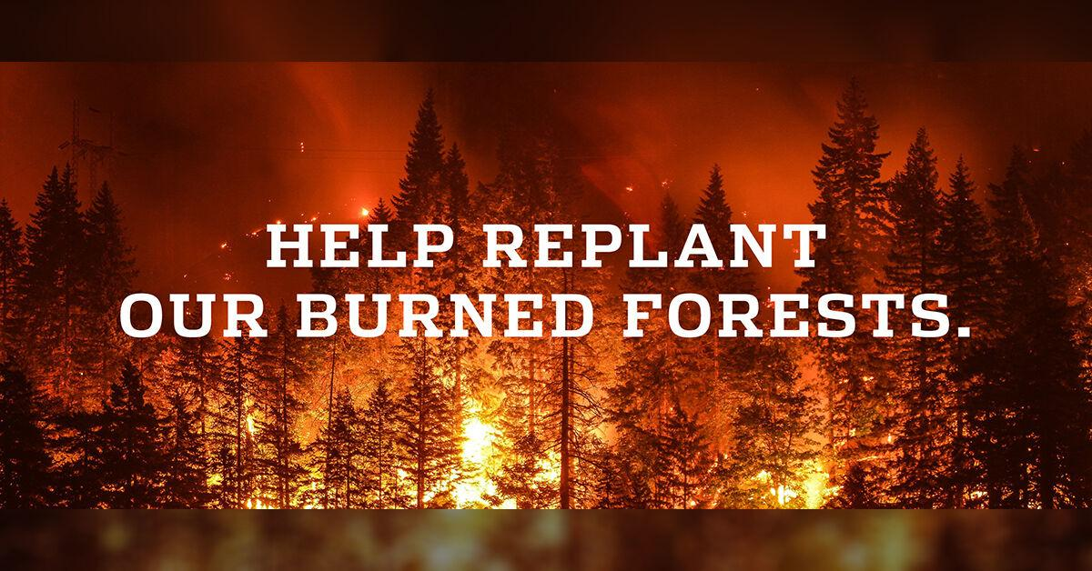 Oregon Parks Forever establishes Wildfire Tree Replanting Fund