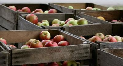 Numbers Are Out for 2014's Washington State Apple Crop