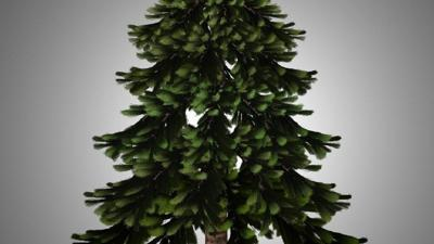 Christmas Tree Permits 2020 Washington State Free holiday tree permits available to 4th graders with an Every