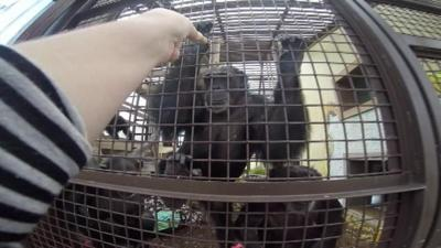 Chimpanzee Experience Continues Long After Famous CWU Chimps