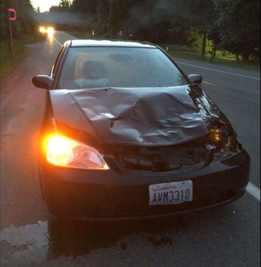 Deer hit by car lands in backseat, kicks driver