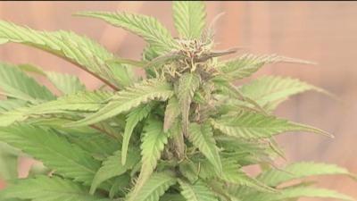 Senate Discusses Marijuana Banking Laws