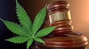 Murray, Cantwell ask DOJ to uphold existing policy on state marijuana laws
