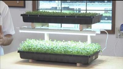 Business Spotlight: Be Leaf Microgreens
