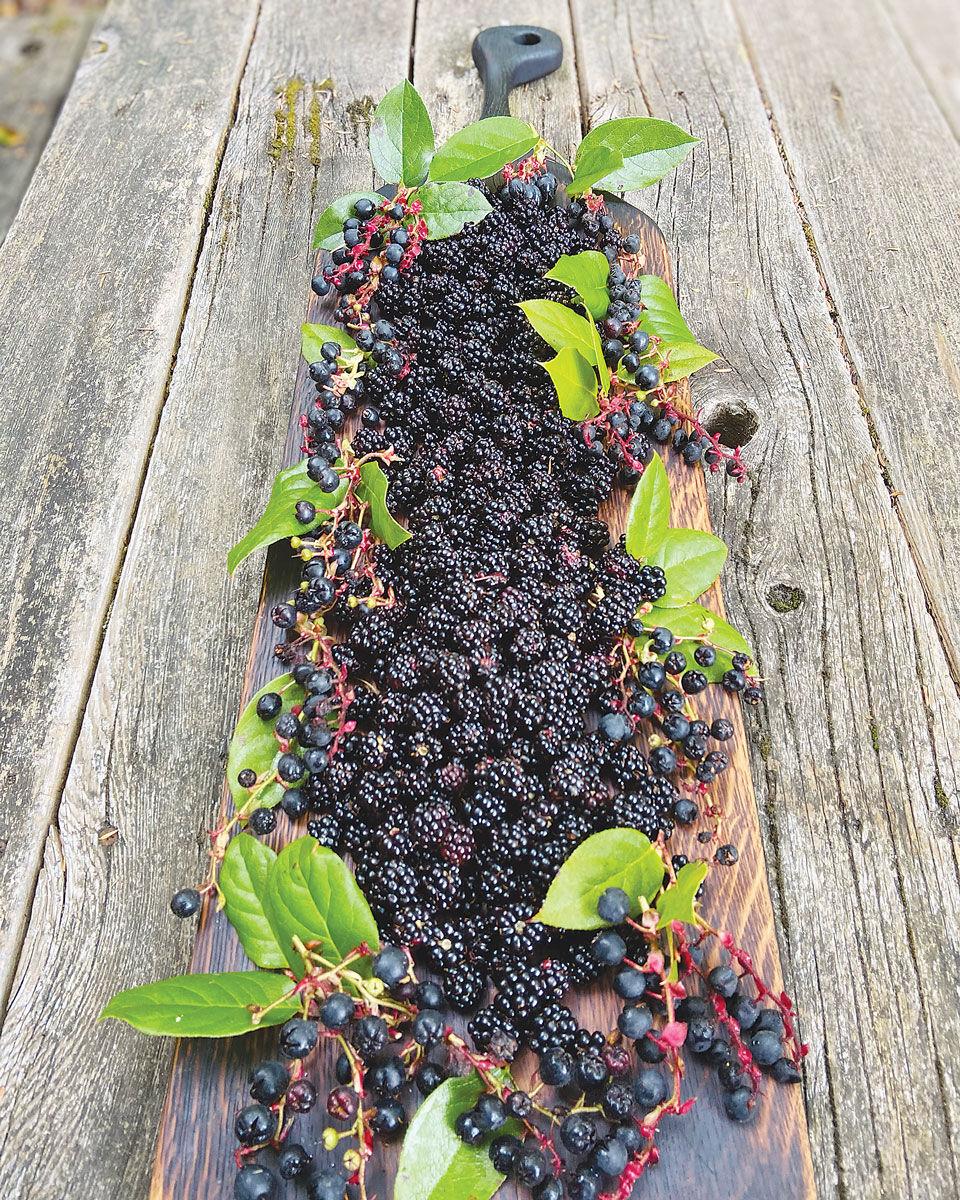 f-kw-Salal-Berries_c.jpg