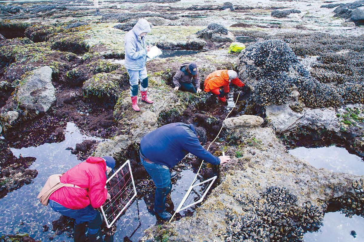 bioblitz-volunteers-do-sea-star-transect-surveys