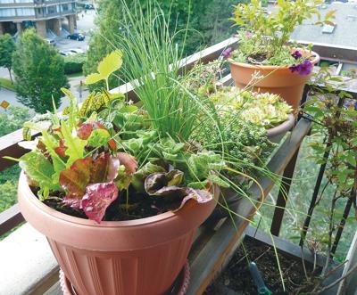 OSU-Extension-pot-up-your-plants