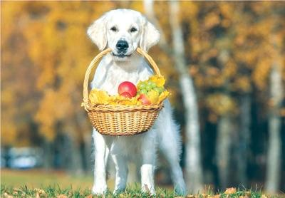 pet-improvement-fruit