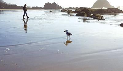 a-seagull-on-beach_c.jpg