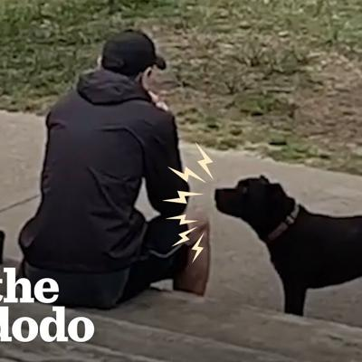 Rescue Pittie Screams At Strangers To Share Their Food | The Dodo Pittie Nation