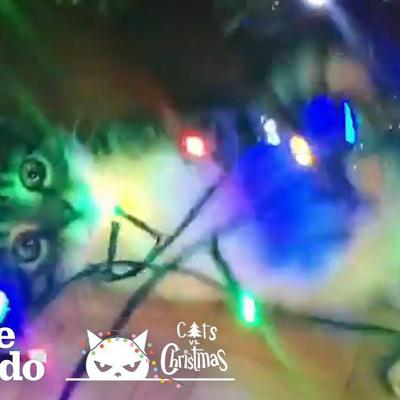 Cats Destroying Christmas Trees And Loving Every Minute | The Dodo