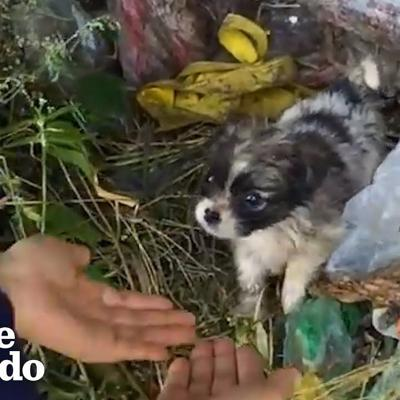 Tiny Puppy Found In Trash Looks So Happy In His Forever Home | The Dodo