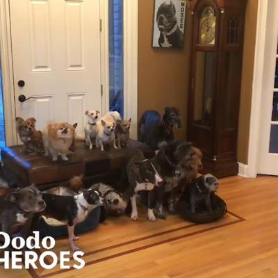 Couple Keeps Rescuing Senior Dogs Everyone Else Gave Up On | The Dodo Heroes