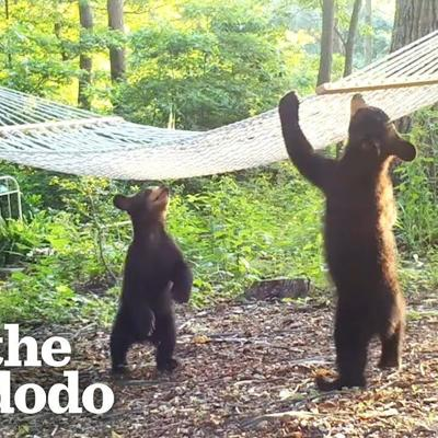 Woman Buys New Hammock For Bear Family In Her Yard | The Dodo