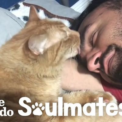 Guy and his super loyal cat have the cutest bedtime routine | The Dodo Soulmates