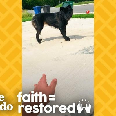 Woman Earns Stray Dog's Trust In the Sweetest Way  | The Dodo Faith = Restored