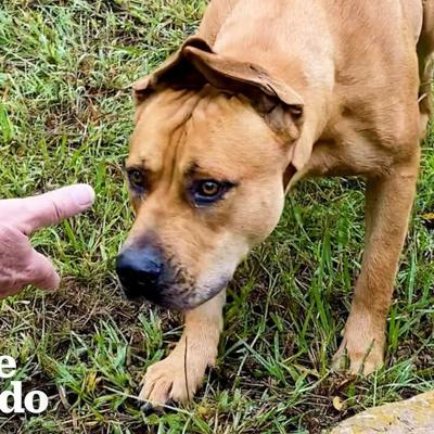 Couples Spends A Year Trying To Rescue A Stray Dog...Then This Happens | The Dodo Faith = Restored