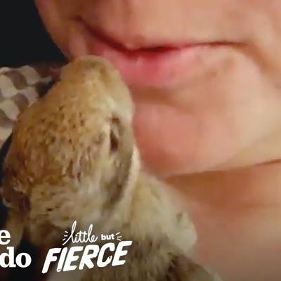 Wild Baby Rabbit Doubles in Size Every Day | The Dodo Little But Fierce